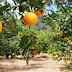 Agricultores de Lagarto, Riachão do Dantas e salgado já podem sacar a última parcela do mão amiga laranja