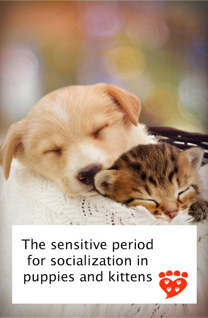 The sensitive period for socialization in puppies and kittens