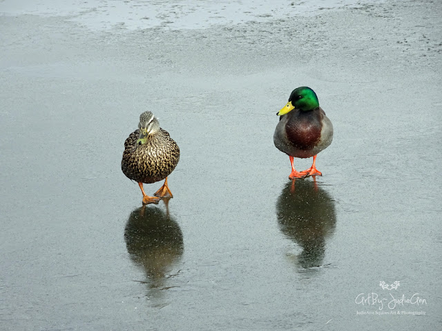 Photography Print Ducks On Ice
