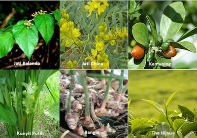 Herbal langsingin-www.infojagakesehatan.blogspot.com-isman