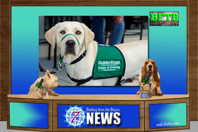 BFTB NETWoof News salute guide dogs