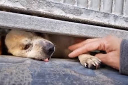 15 years old blind senior cries of sadness longing for help out of overcrowded kill shelter