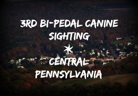 3rd Bi-Pedal Canine Sighting - Central Pennsylvania (Update)