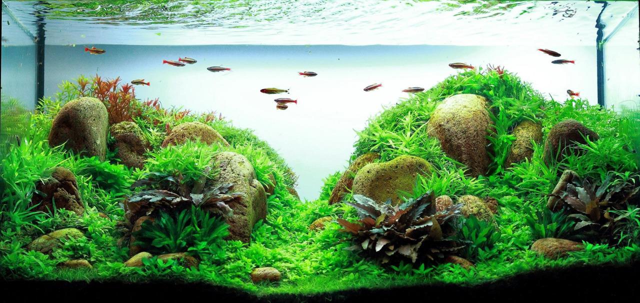 Một bể thủy sinh dùng đá cuội rất đẹp