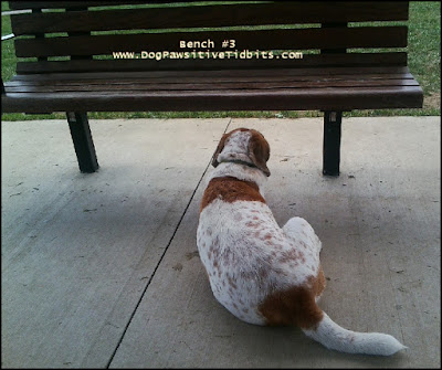Empty Bench at Dog Park