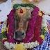 இறந்த மாட்டின் நினைவாக, கிராம மக்கள் வழிபாடு..! எங்கு தெரியுமா?