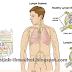 Kanser Limfoma, Tanda-tanda, Penyebab dan Rawatannya