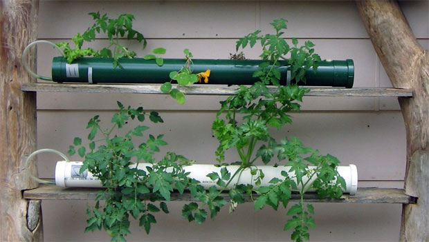 Cara Bertanam Hidroponik Sayuran Sederhana di Rumah