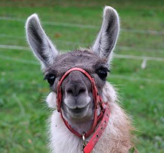 les ateliers du lama