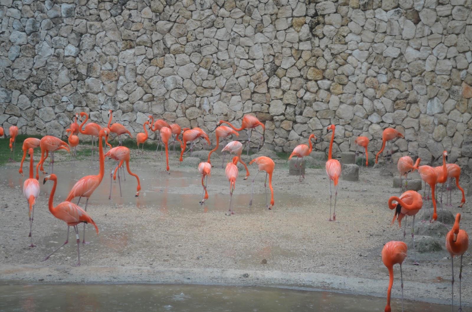 Flamingos Xcaret
