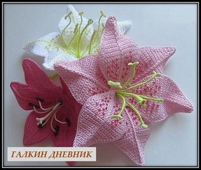 cveti shema kryuchok lilii