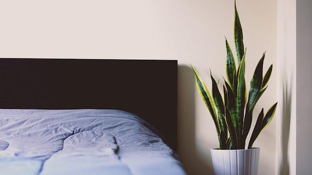 dormir con plantas en la habitacion