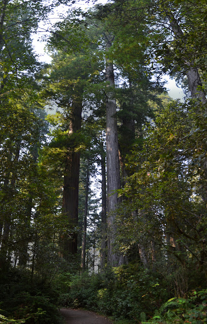 trees with white bark or red bark
