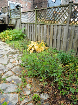 Leslieville Fall Cleanup Before by Paul Jung Gardening Services--a Toronto Gardening Services Company