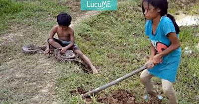 Video Aksi Dua Orang Anak Pencari Ular Untuk Hidupi Keluarganya Ini Viral