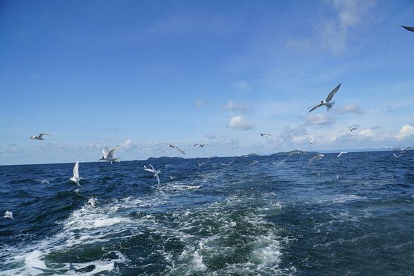 hải âu săn cá