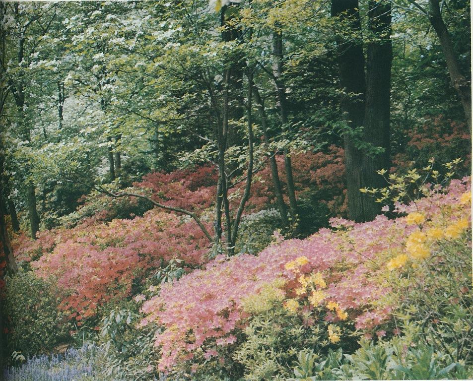 Secret Garden: The Peak Of Chic®: Babe Paley's Secret Garden
