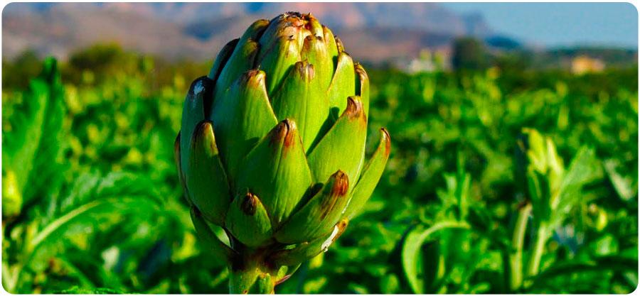 Beneficios de las alcachofas