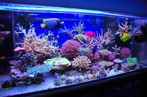 Aquarium%2BLaut%2BYogyakarta