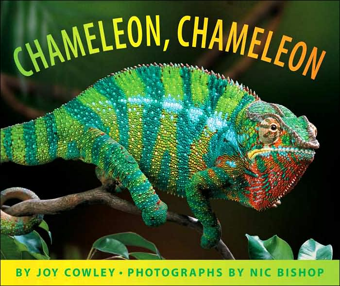 Where To Get Chameleon Paint