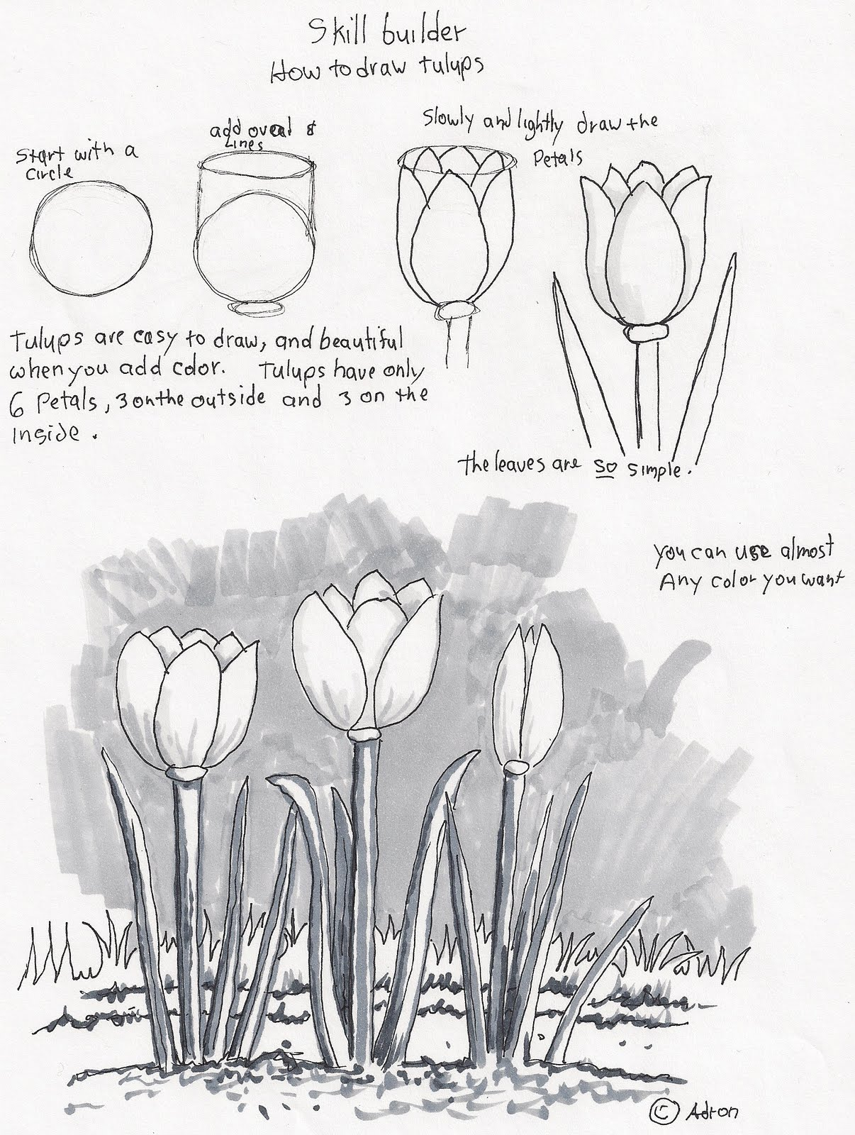 Adron S Art Lesson Plans How To Draw Tulips A Beginners