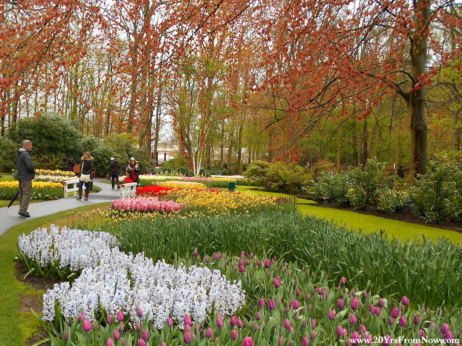 20 Years From Now: Tulips, Tulips, More Tulips