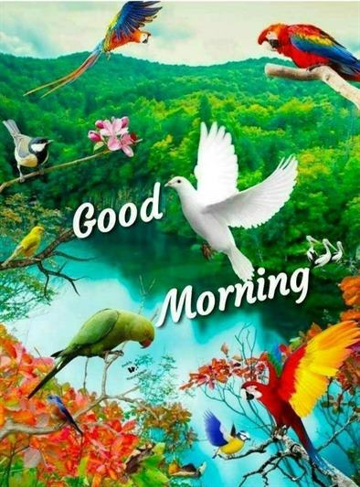 Good Morning Photo Download