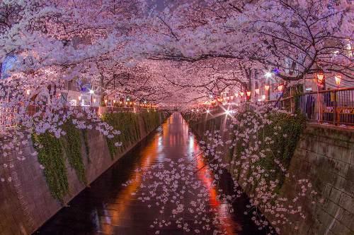https://i2.wp.com/3.bp.blogspot.com/-s9-sppnntxs/Vv-D8b73qjI/AAAAAAAANDs/Aw18WjyMu7gkSRRhhyfTVGBhQ7DbJfzwg/s1600/Tempat-Terbaik-Melihat-Sakura-di-Tokyo-1.jpg?resize=632%2C420&ssl=1