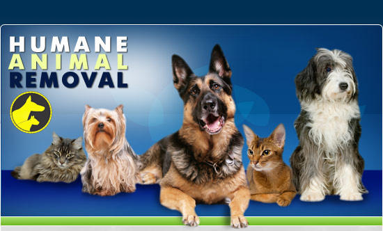 humane animal removal services