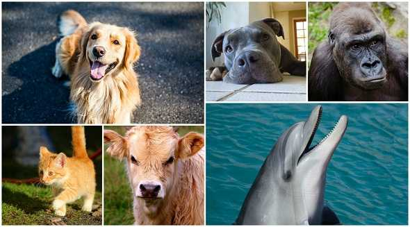 Top-8-Situations-Animals-saved-Humans-افضل-8-مواقف-أنقذت-الحيوانات-فيها-البشر