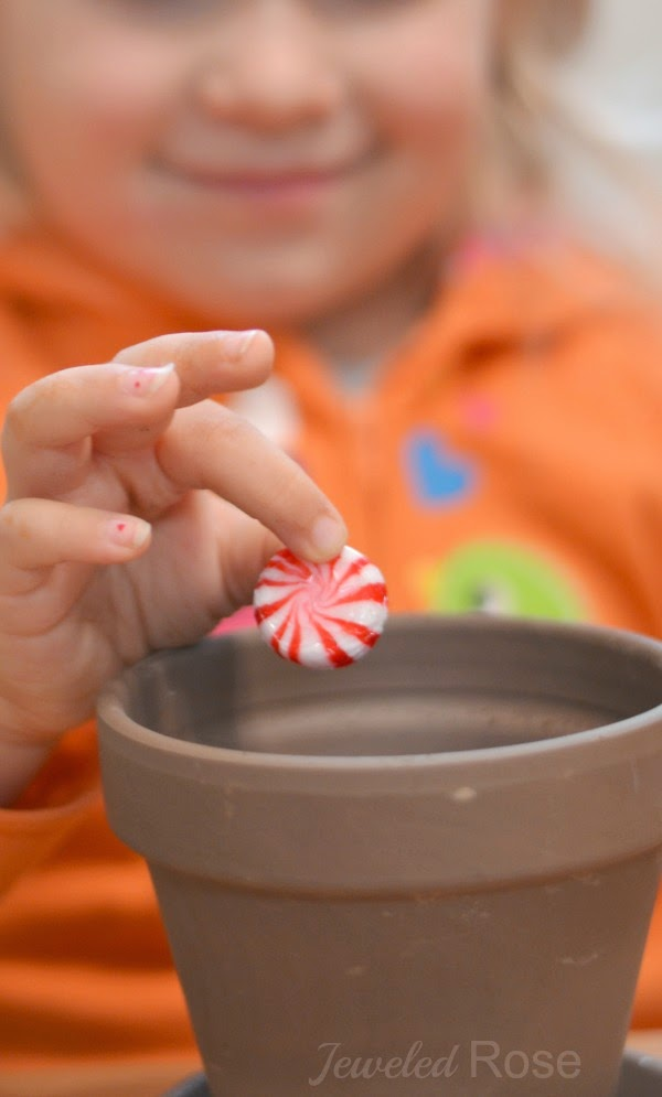 HOW TO GROW A CANDY CANE - simple holiday magic for kids
