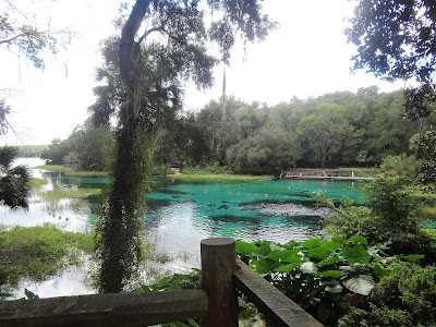 Süßwasserquelle in Rainbow Springs State Park, Florida USA