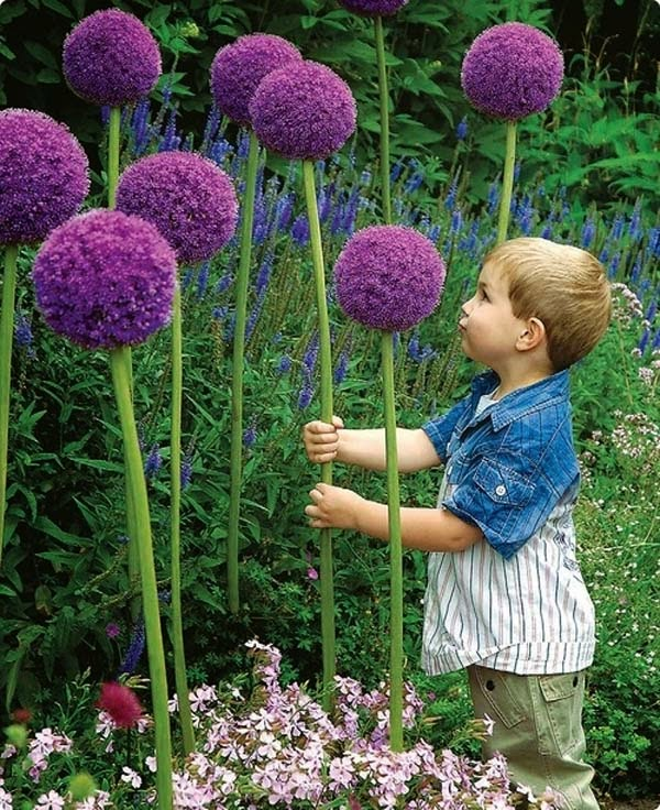 2.) Plant giant allium flowers to make your back yard look like something out of Dr. Seuss. - These 29 Do-It-Yourself Backyard Ideas For Summer Are Totally Awesome. Definitely Doing #10!