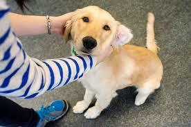 La modificación del comportamiento del perro toma consistencia