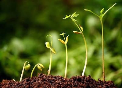 Série: Crescimento - O propósito da minha vida