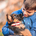 3 Best Dog Training Apps to Help Socialize Your Puppy