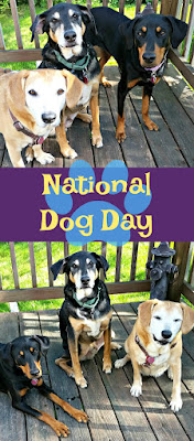 3 rescue dogs national dog day