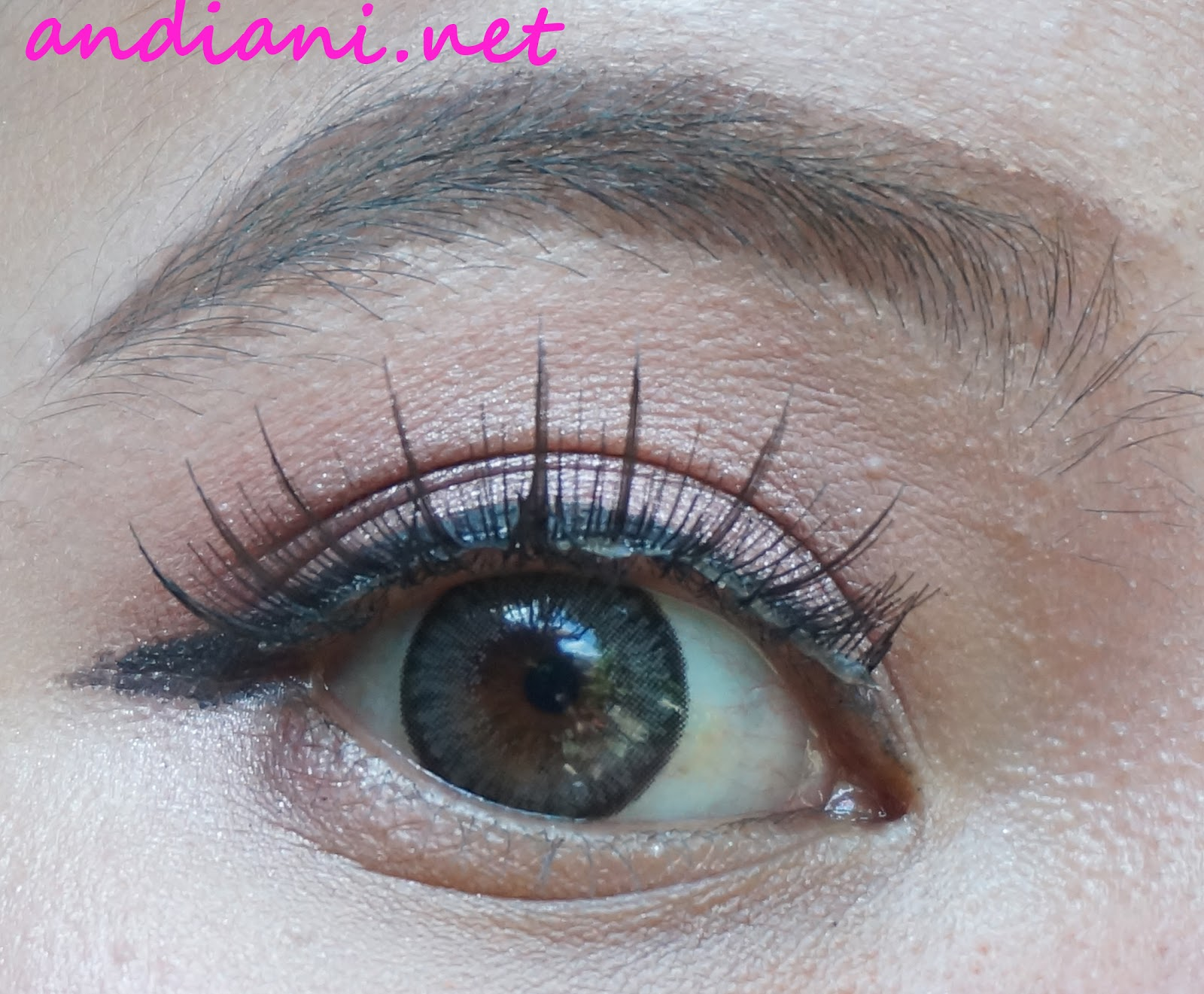 Review Softlens Exoticon A Grey Andianis Beauty Journal X2 Ice N8 Grosir Ini Indoor