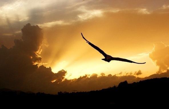 Terbang tinggi