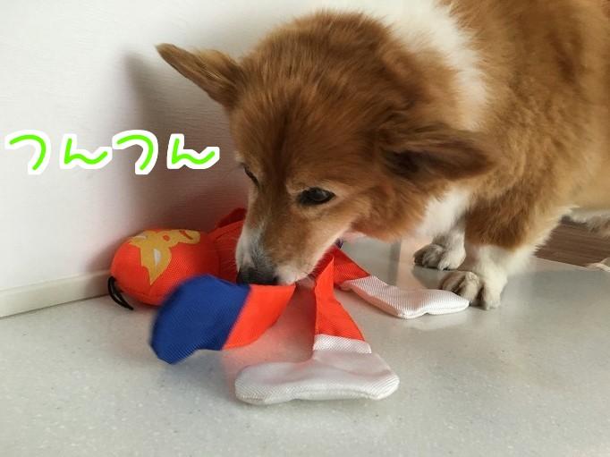 オレンジレンジャーと風太08