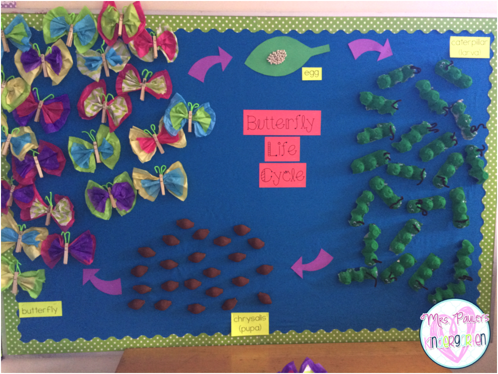 All Kinds Of Insect Fun on April Bulletin Board Ideas