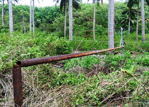 Tiang Listrik Patah, Pohon, Tumbang, Timpa Rumah Warga Akibat Angin Kencang