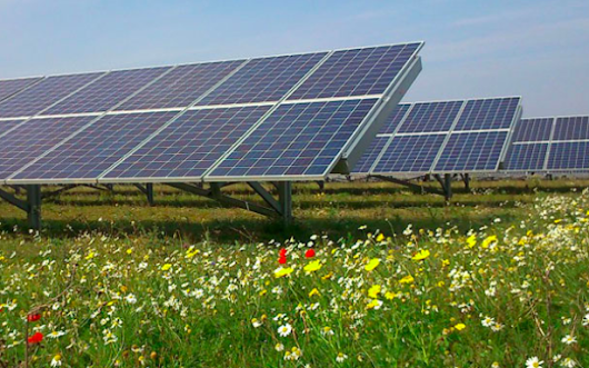 Solar farms with wildflowers return habitats for bees