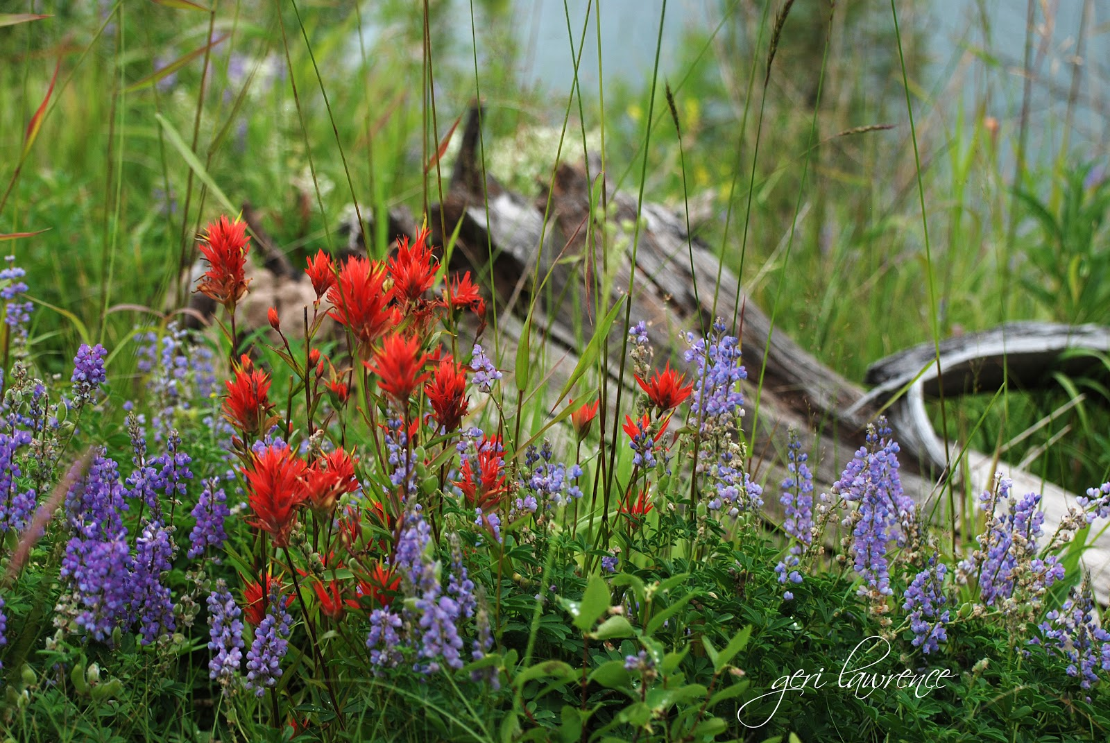 Whisperings Of Nature Photography