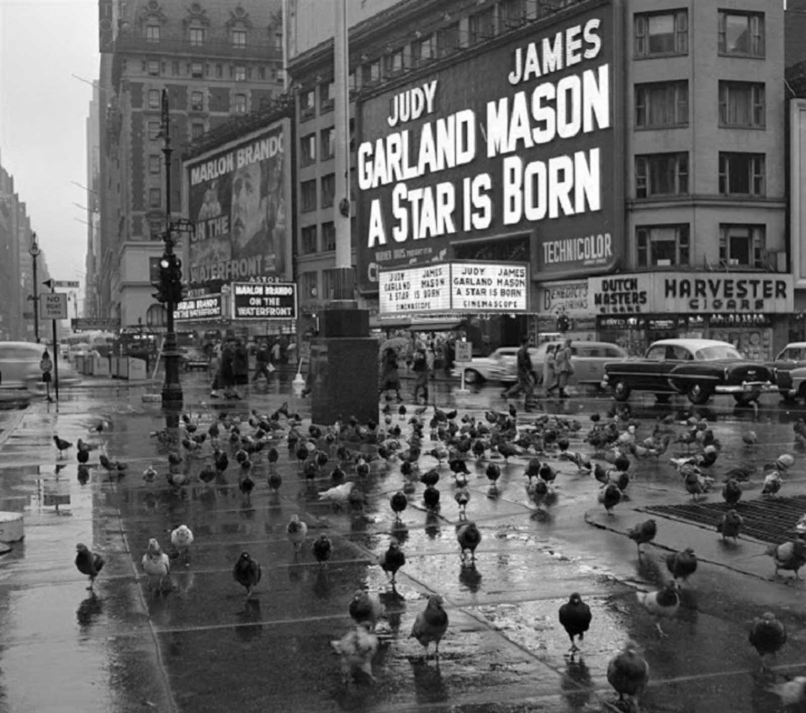 Pigeons gather in Times Square on a rainy day in 1954 in front of the marquee for