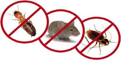 Seberapa Penting Obat Pembasmi Semut dan Kecoa ?
