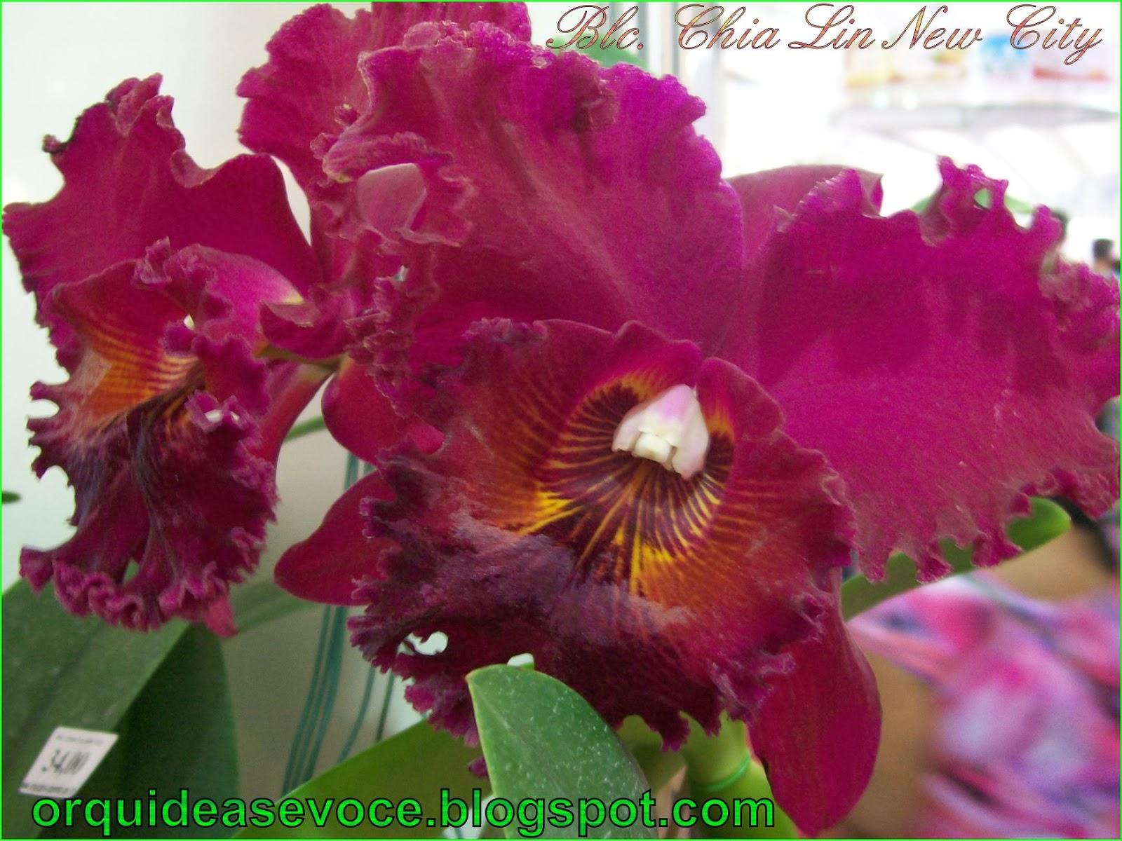 Plantas Orquideas Dicas Noticias Curiosidades Fotos De