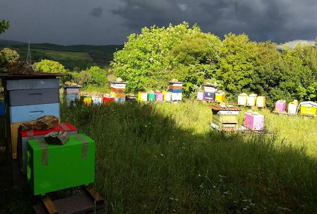 Τι πρέπει οπωσδήποτε να έχει στο μελισσοκομείο μας για να μην χάνονται μελίσσια;