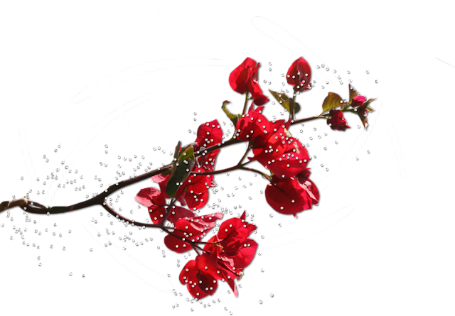 разделители для текста, разделители, для веб-дизайна, для сайтов, для блога, оформление текста, для оформления, для текста, для интернета, для страниц, украшения графические, дизайн графический, декор, декор для постов, декор для сайта, картинки, картинки для сайта,   украшения, бижутерия, красота, розы, разделители с цветами, разделители с розами, цветы, разделители с украшениями, разделители с бижутерией, камни, украшения с камнями,