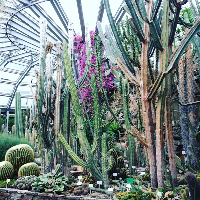 Inside one of the greenhouses in Botanical Garden, Berlin